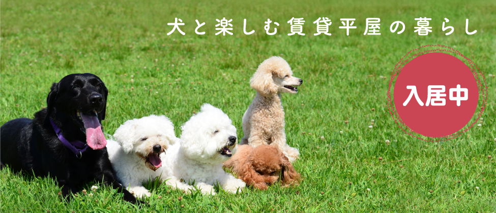 犬と楽しむ賃貸平屋の暮らし